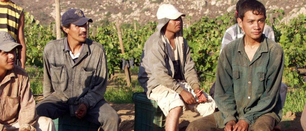 Recolectores de uva mexicanos