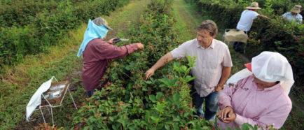 trabajadores campo inmigrantes