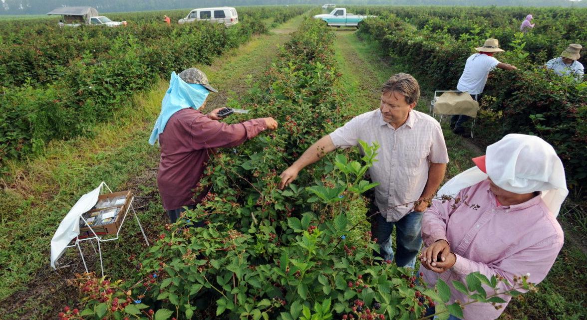 Inmigración, tarifas: Panorama sombrío para el campo en EE.UU.