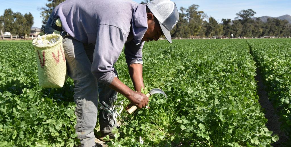 campesinos trabajadores dell campo agricolas
